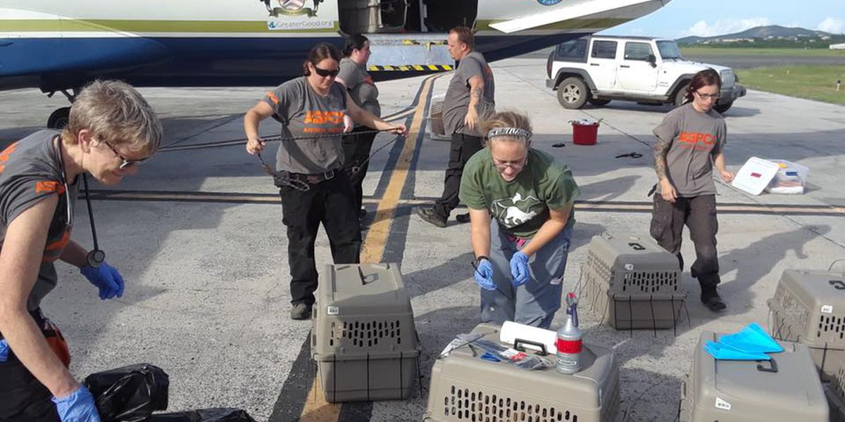 Homeless animals from St. Croix on their way to Charleston