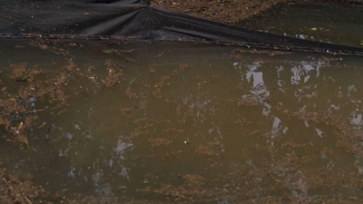 James Island residents ask for federal help after concerns over James Island Creek