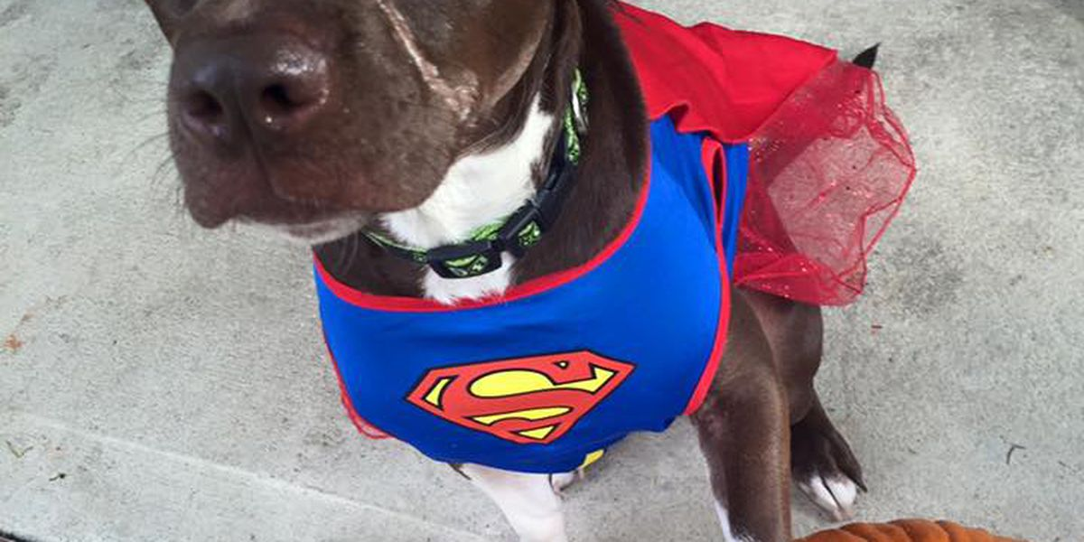 Caitlyn the dog serves as ambassador for humane treatment of animals