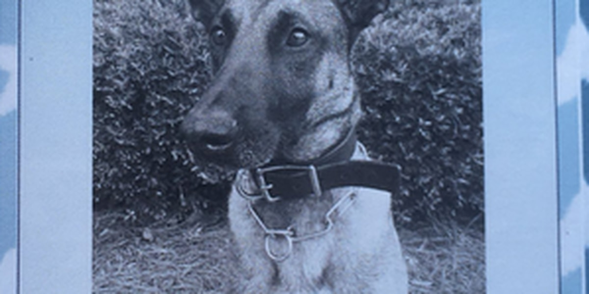 Lowcountry law enforcement pays tribute to fallen NCPD K-9 officer