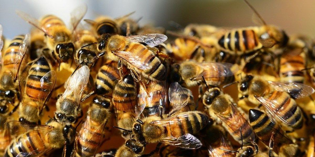 Dorchester County beekeepers address county council