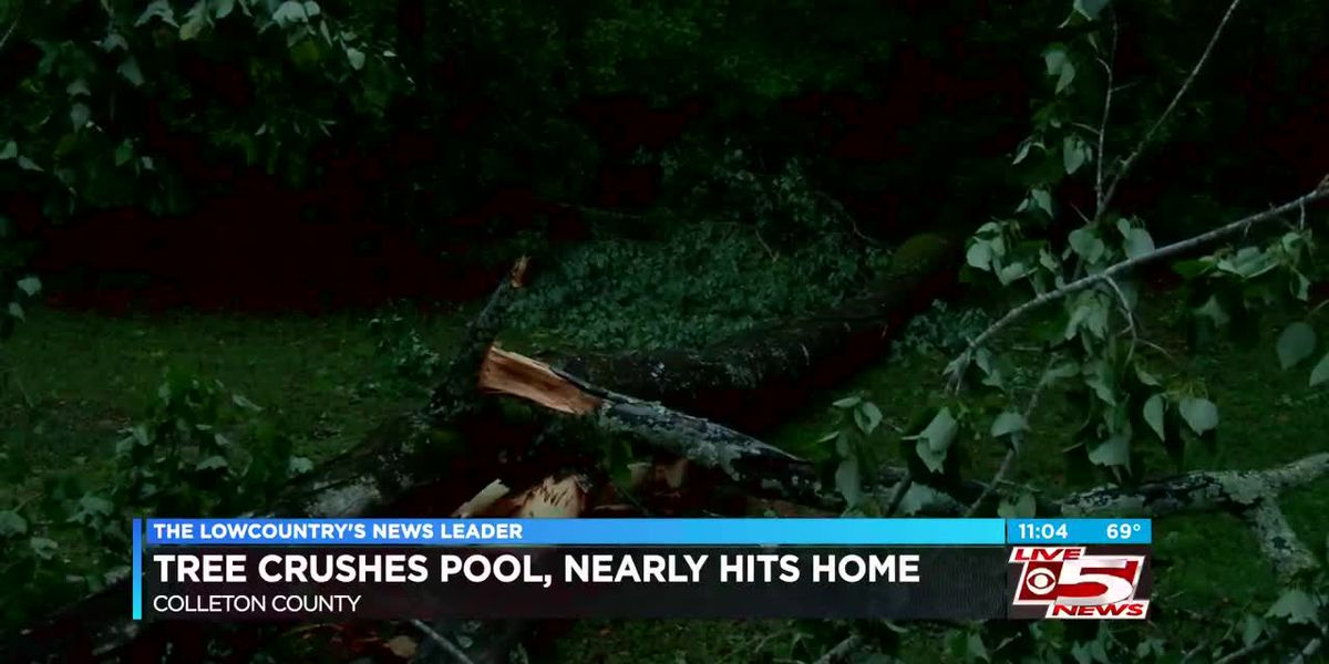 Tree crushes Colleton County man's 18-foot pool
