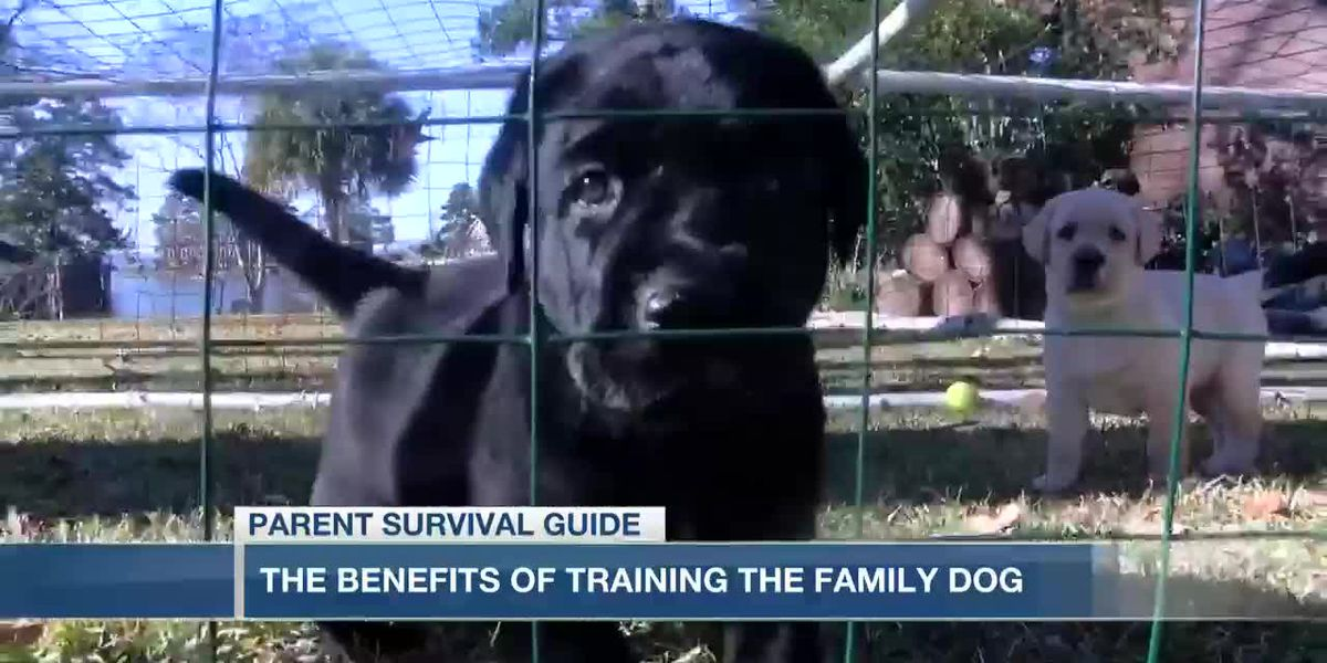 VIDEO: Parent Survivial Guide: The benefits of training the family dog
