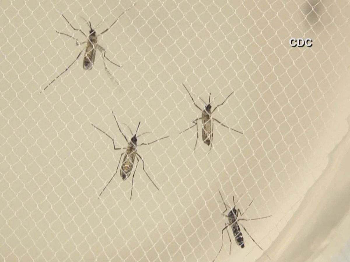FACT OR FICTION: Can mosquitoes spread COVID-19?