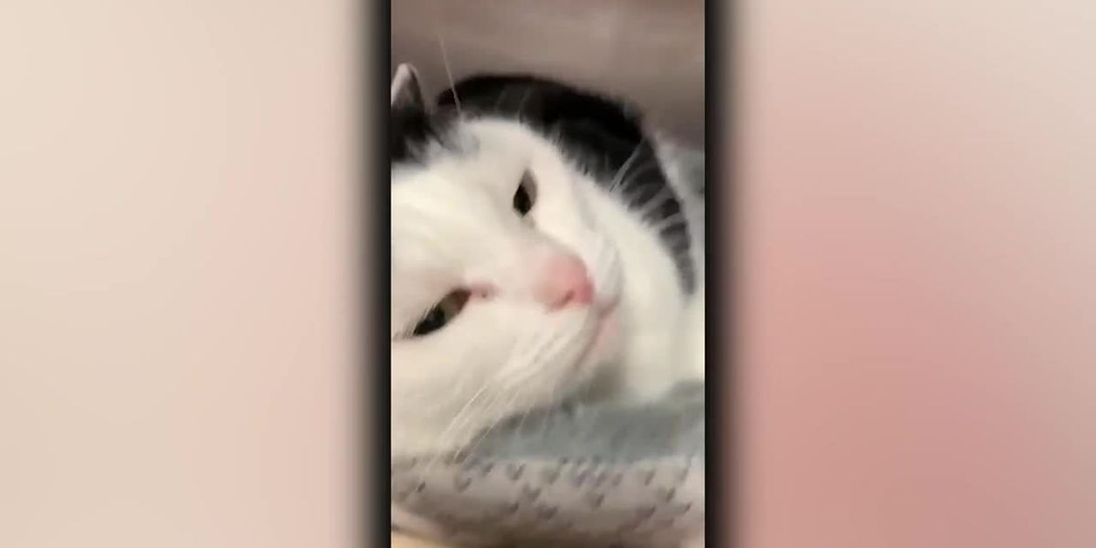 'World's Worst Cat' learns of newfound fame