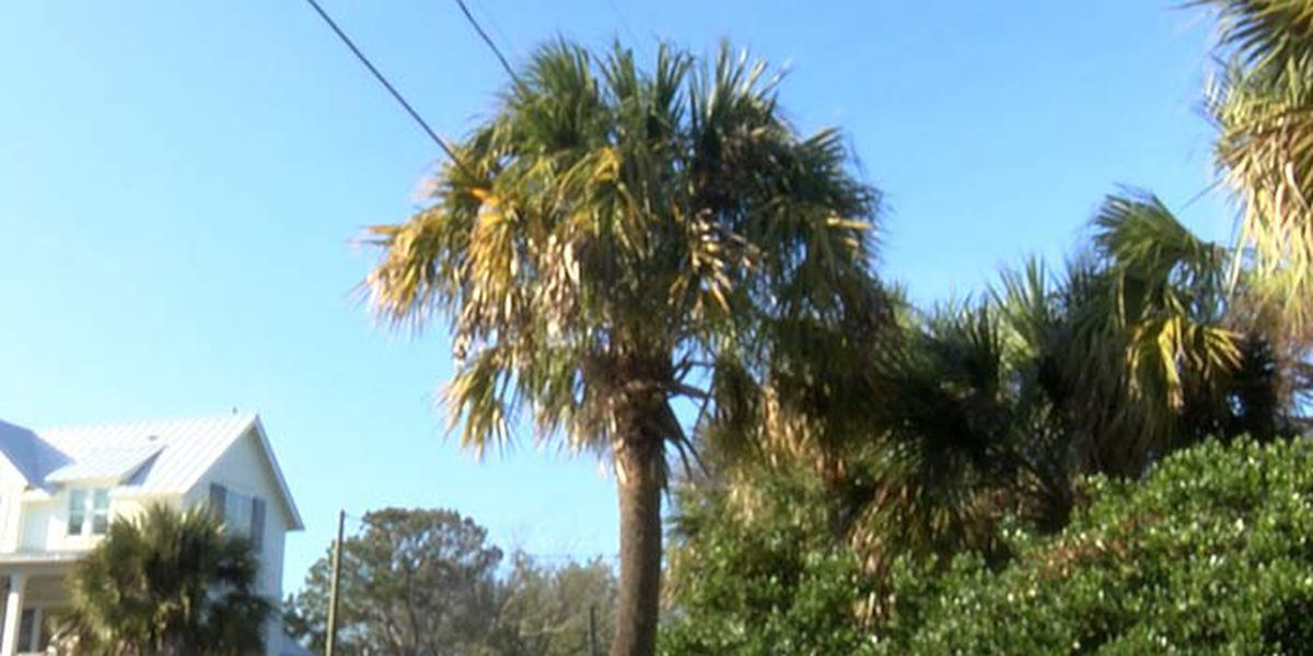Dominion Energy suspends plan to cut trees on Sullivan's Island