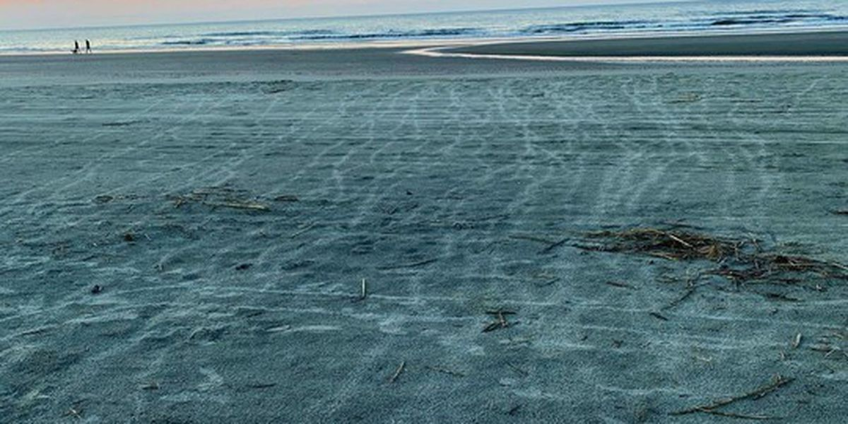 First sea turtle nest hatches in the Palmetto State