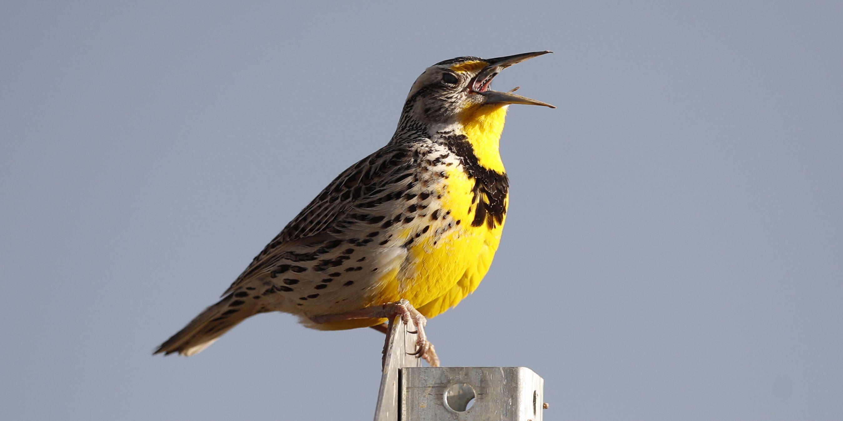 Where have the wild birds gone? 3 billion fewer than 1970