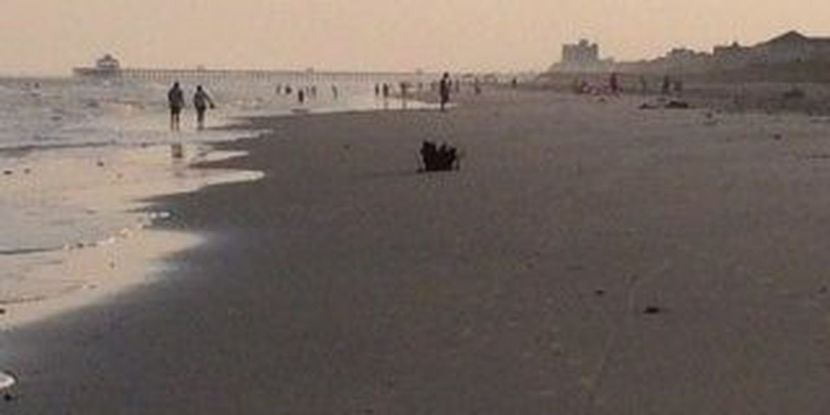 Folly shark attack concerns, but doesn't scare off vacationers
