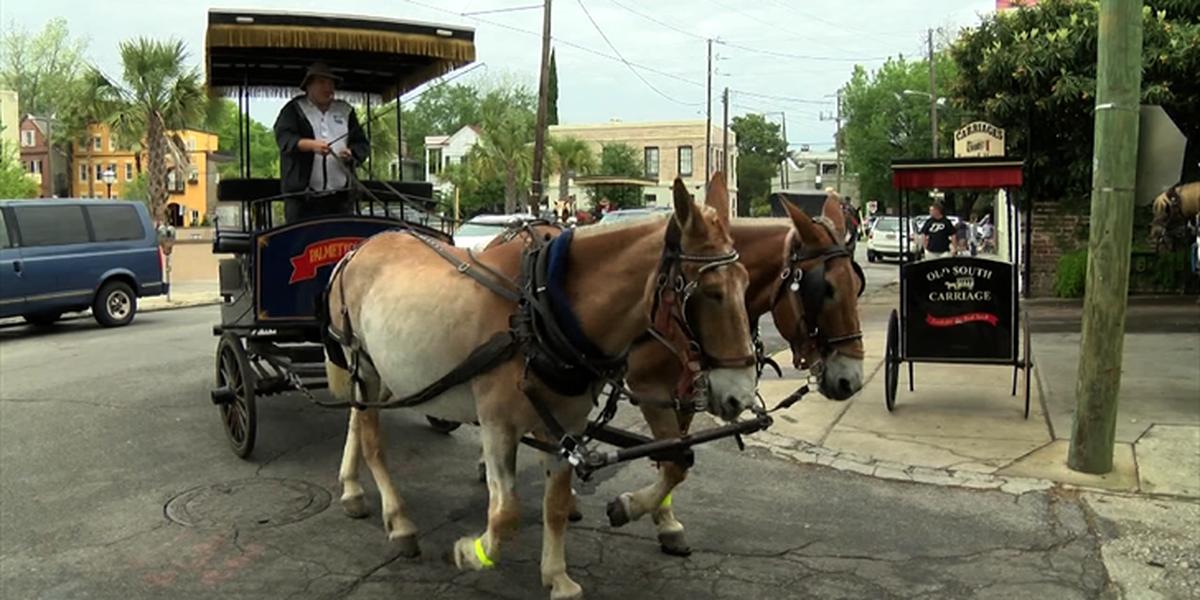 Charleston Animal Society presents proposal on carriage horses
