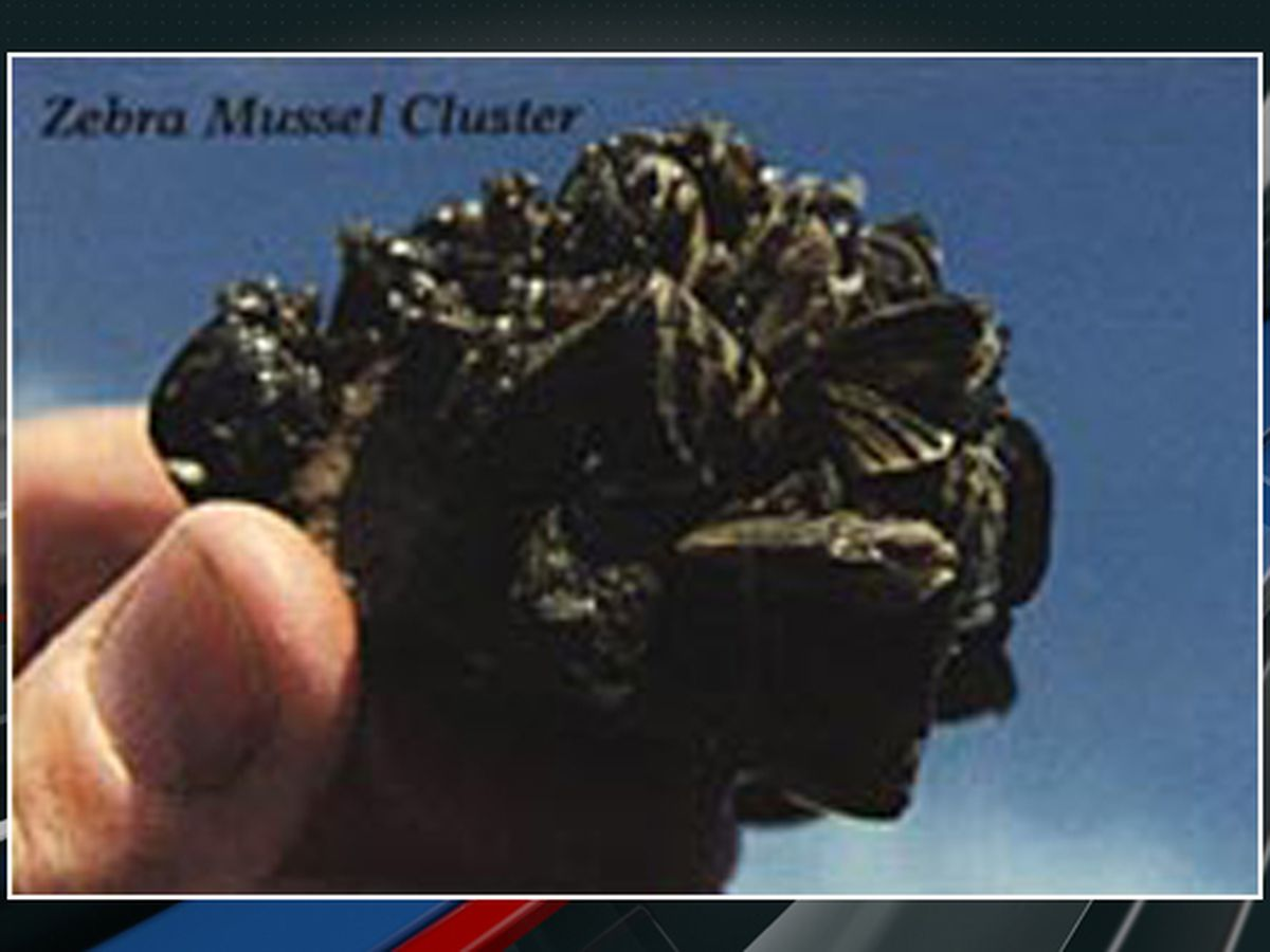 Invasive mussels found in products sold at South Carolina pet supply stores