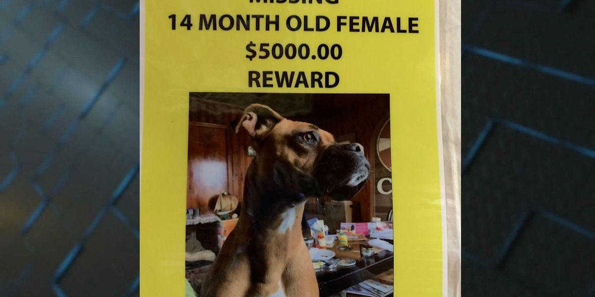 'It broke my heart:' Loris veteran offers $5K reward for missing emotional support dog