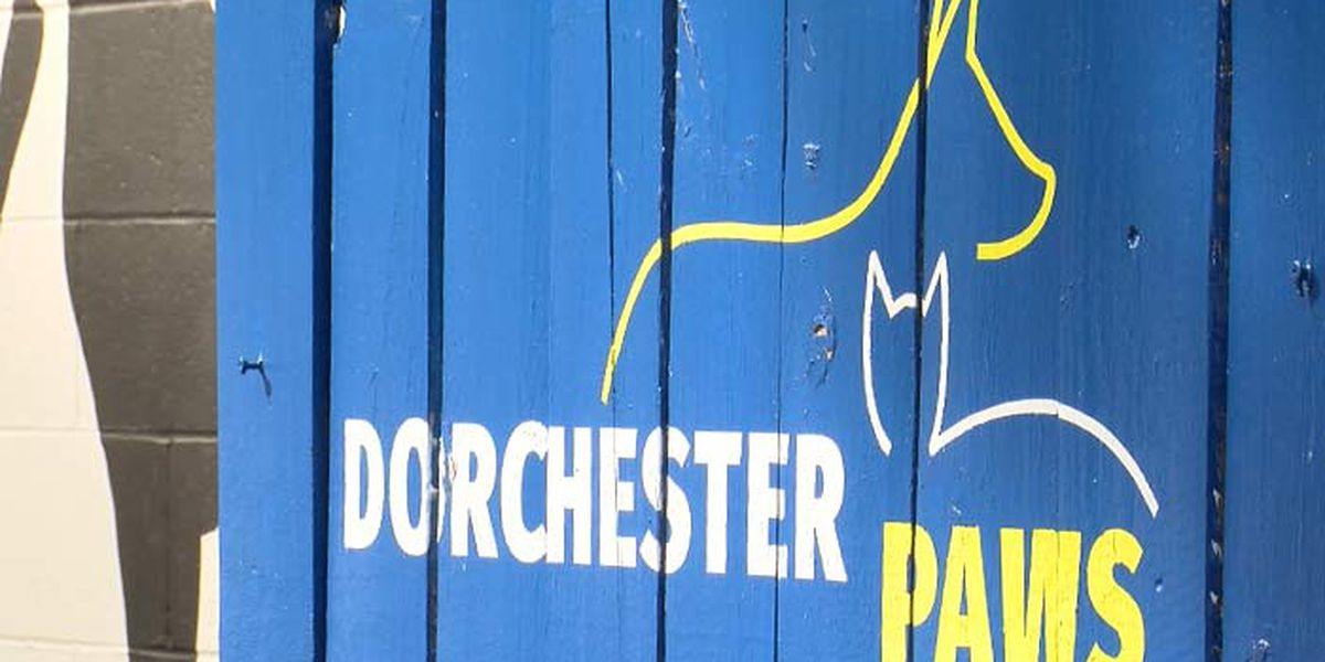 For first time in 2 years, Dorchester Paws empties shelter