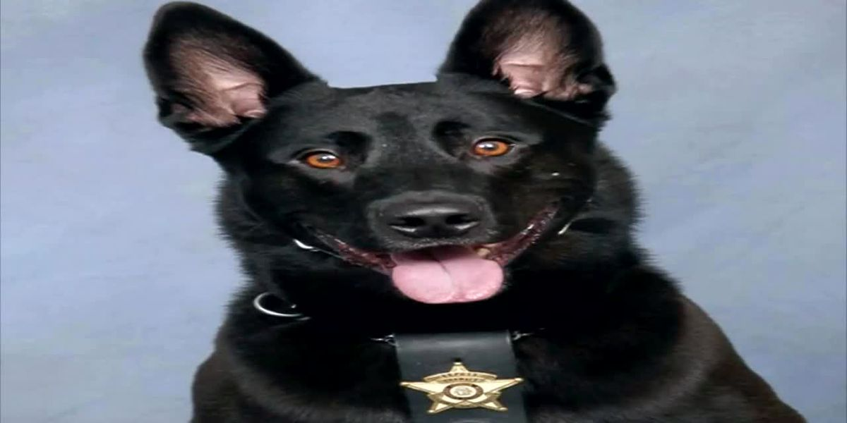 K9 killed after biting deputy during chase