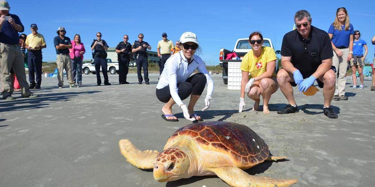 SC Aquarium releases rehabilitated loggerhead turtle