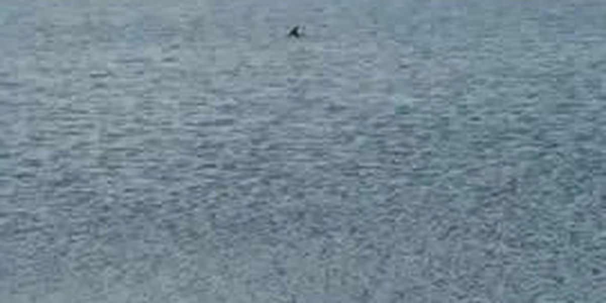 Locals concerned about dolphin deaths in Goose Creek