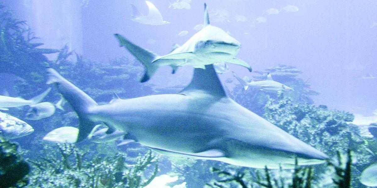 Myrtle Beach sinks ordinance designed to keep sharks away