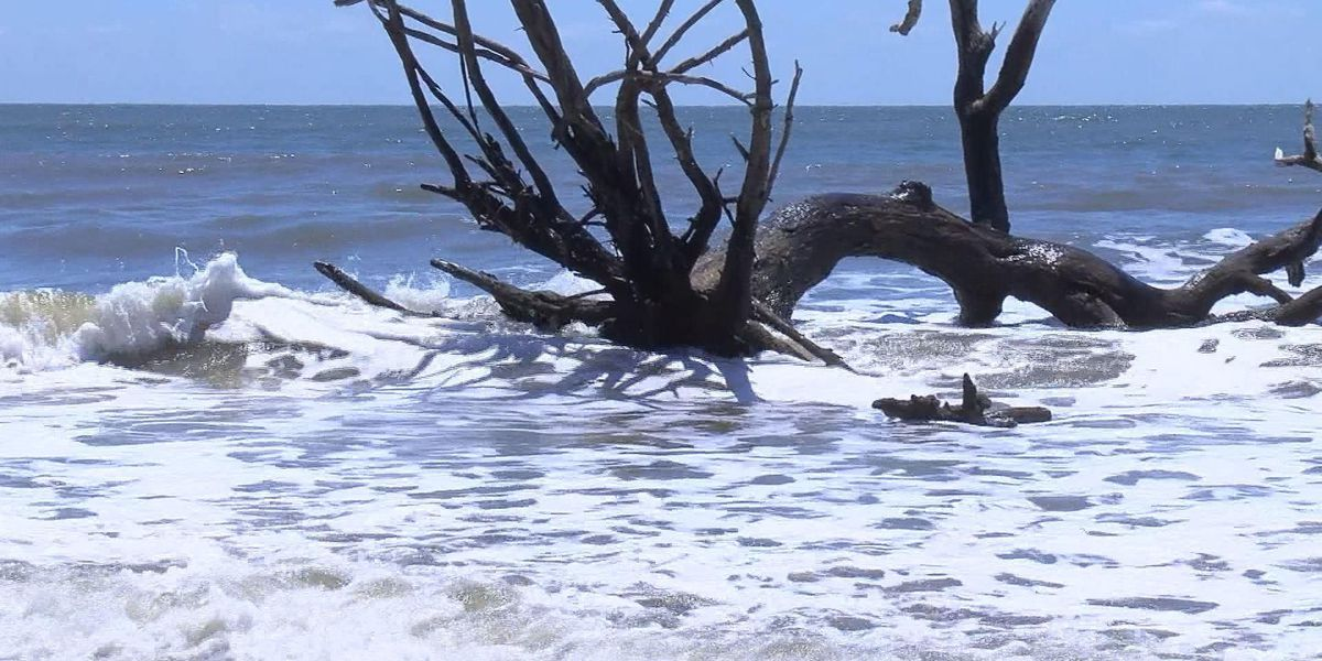 Botany Bay Beach experiences changes after Hurricane Matthew