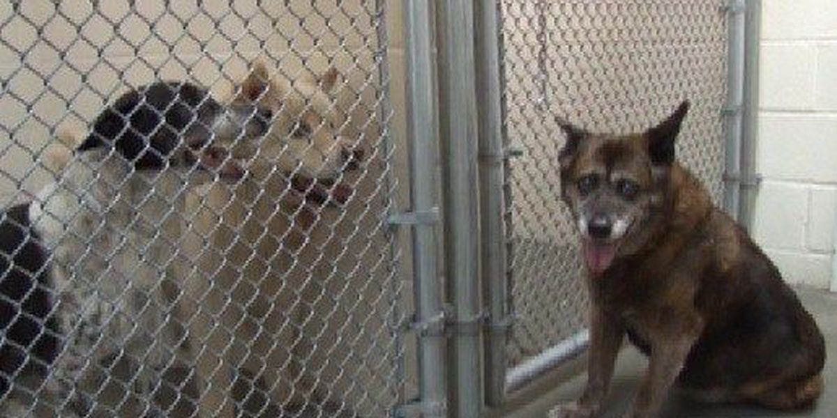Veterinarian takes in rescued dogs of missing Hollywood woman
