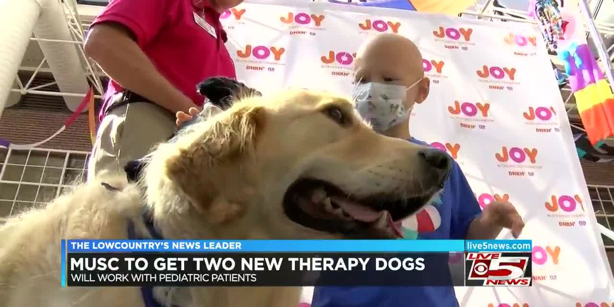 VIDEO: MUSC pediatric patients getting two new therapy dogs