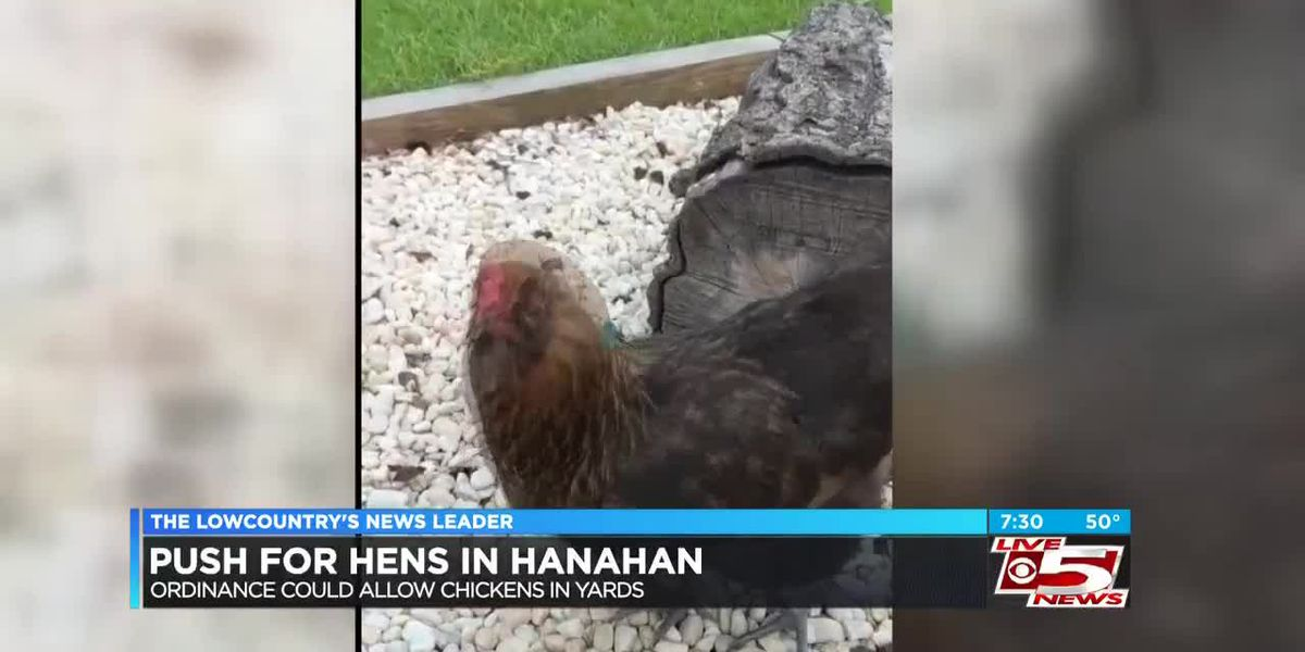 Hanahan considering change to ordinance prohibiting residents from keeping chickens