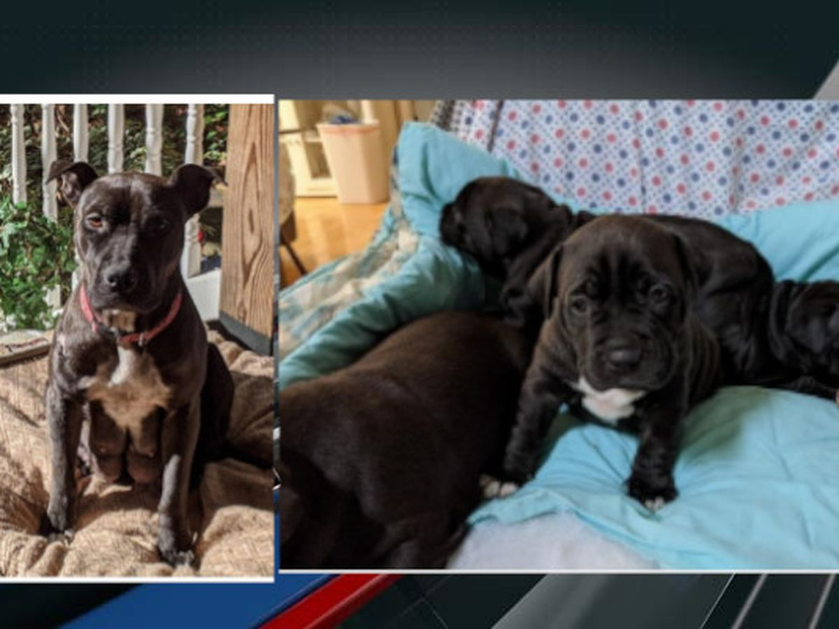 Deputies asking for information in Johns Island dog theft