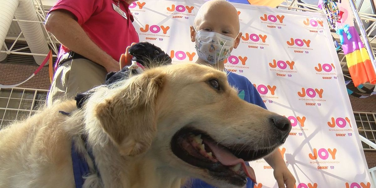MUSC pediatric patients getting two new therapy dogs