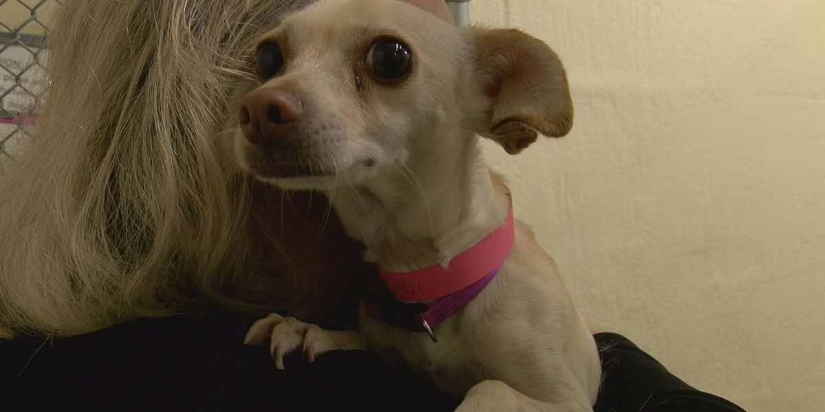Charleston Animal Society partnering with PetSmart for 'National Adoption Weekend'