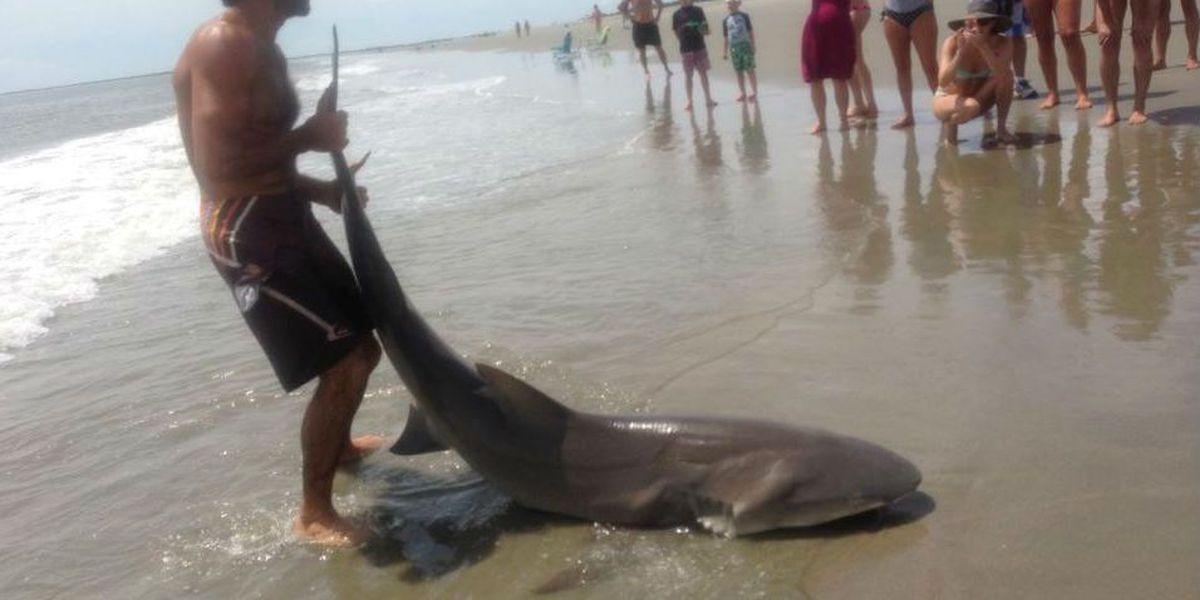 Man reels in shark on Sullivan's Island