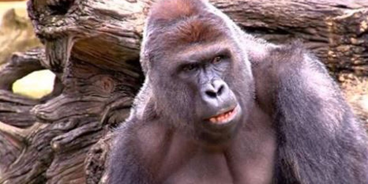 TAKE A STAND: The Death of Harambe