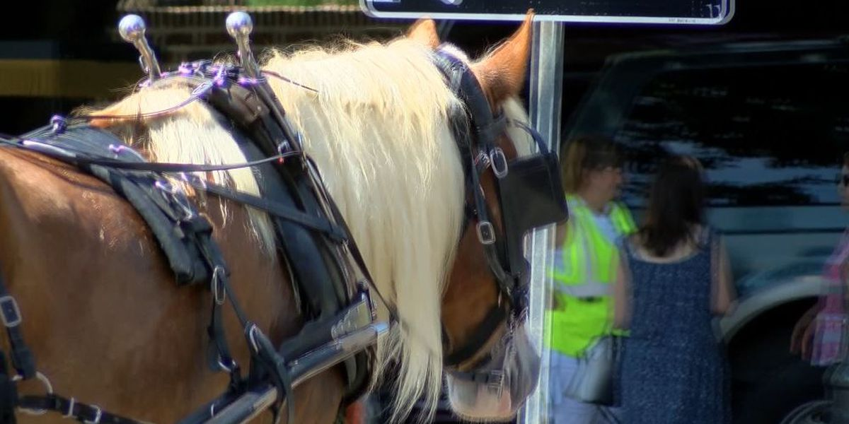 Newly-proposed horse carriage rule would allow city to pull carriages in emergency