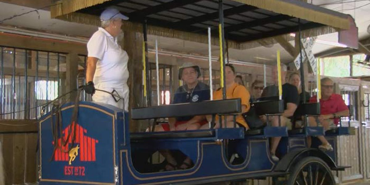 Downtown carriage tours return with new rules