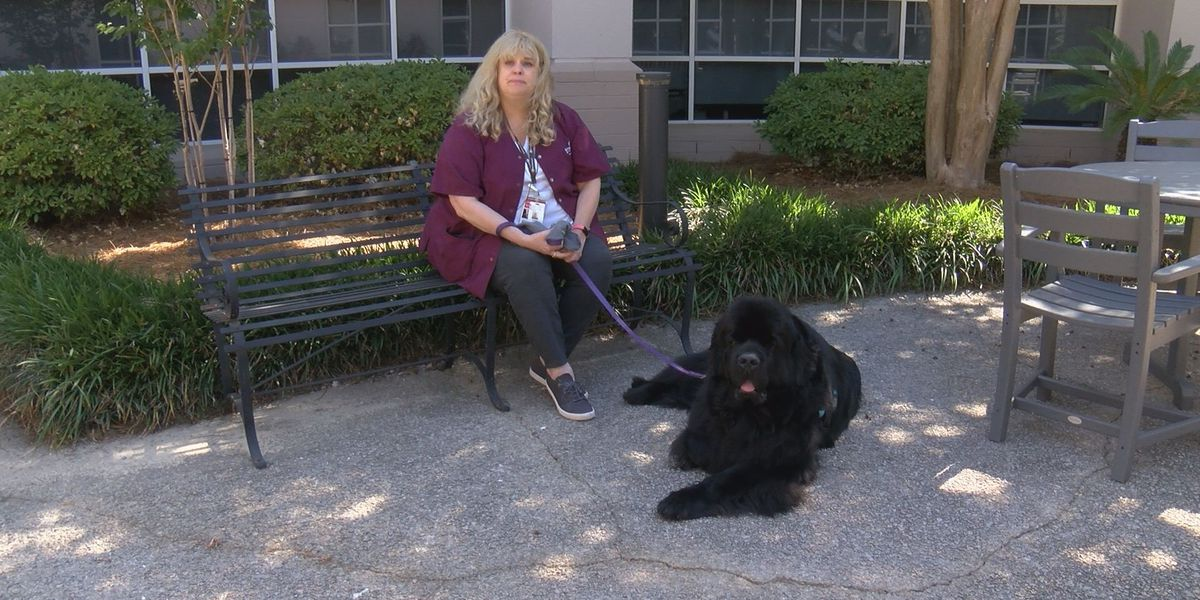 Former hospital patient starts her own pet therapy non-profit in Summerville
