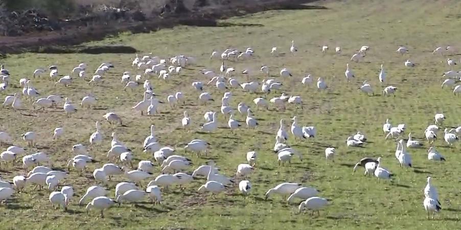 Avian cholera outbreak kills thousands of birds at California's Salton Sea