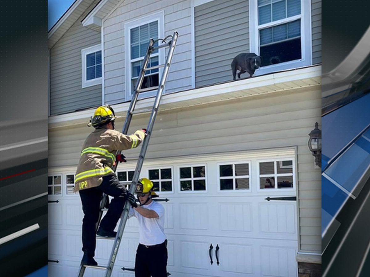 Firefighters rescue dog on the roof at Beaufort home