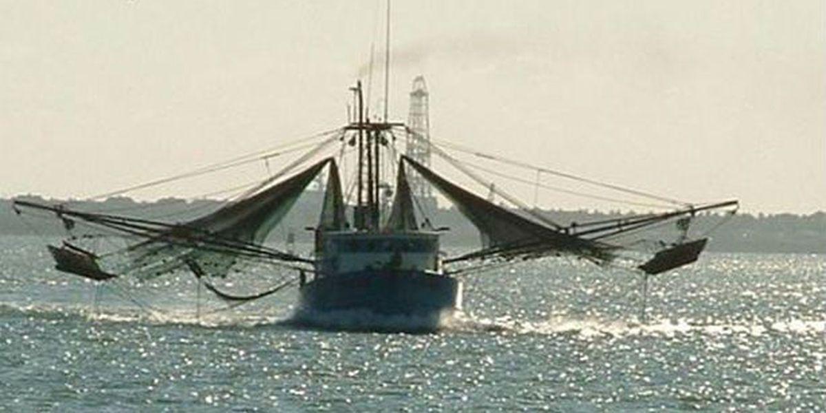 Commercial shrimp season opens Thursday
