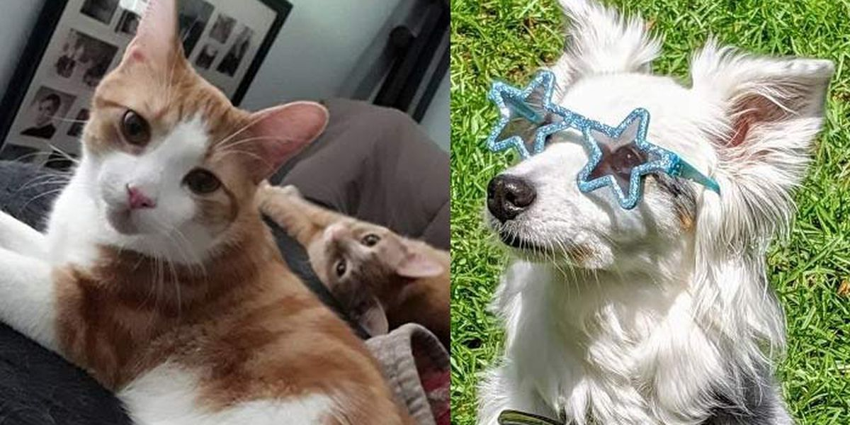 Viewers send pet photos for 'All American Pet Photo Day'