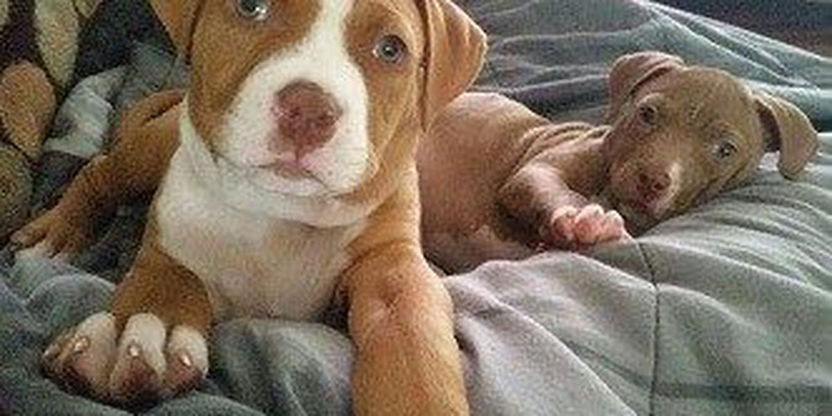 Witnesses report puppies stolen from backyard in Dorchester Co.