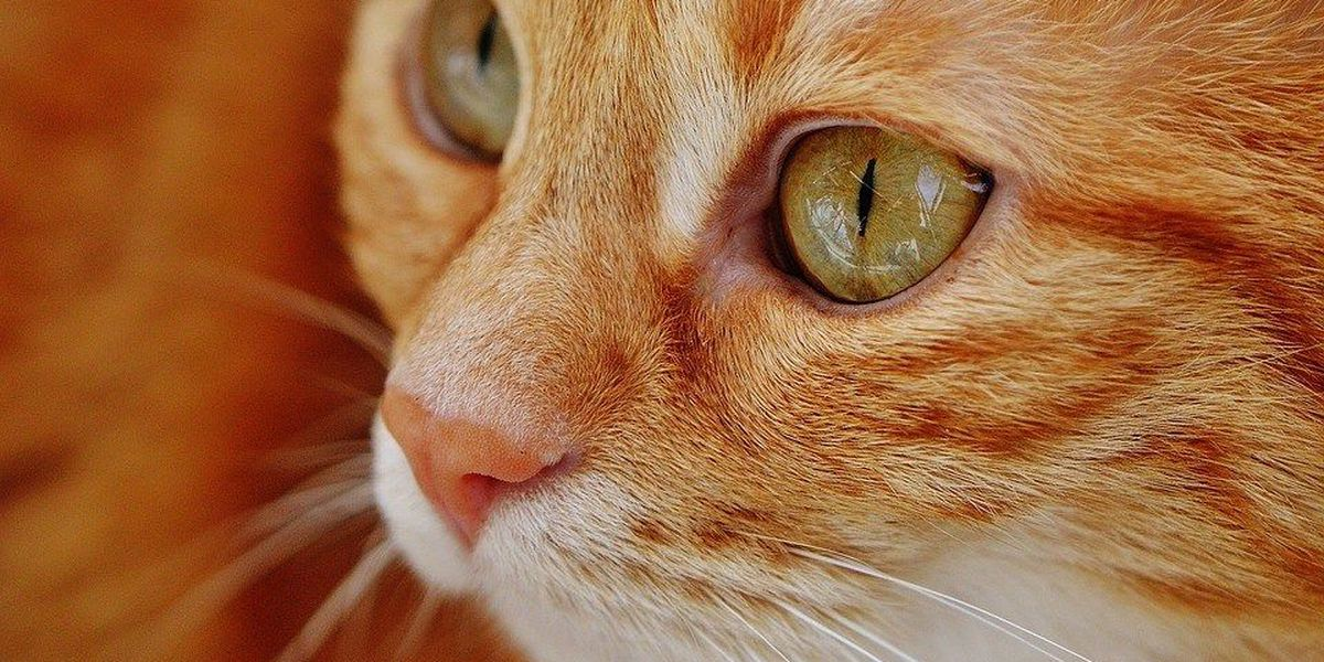 Cat food under voluntary recall over low vitamin levels