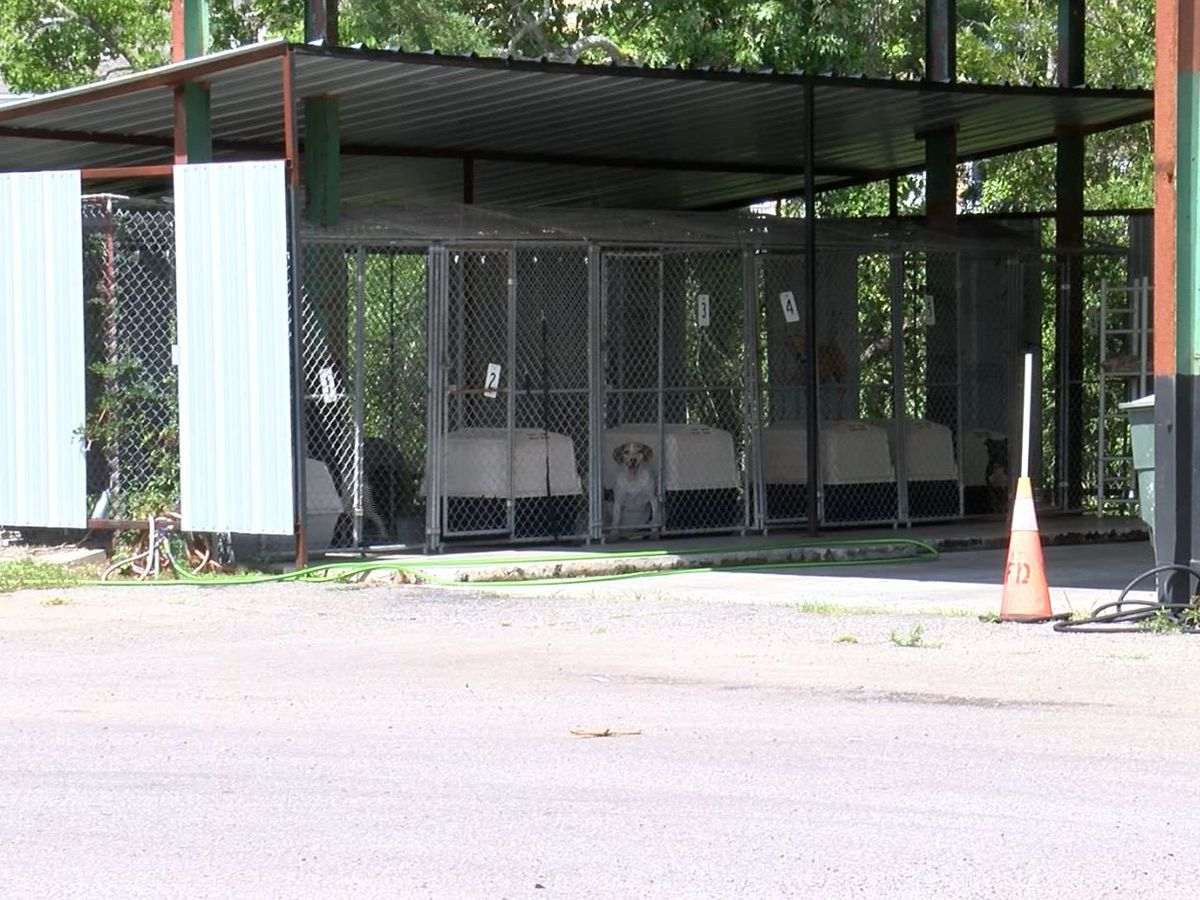 Some residents frustrated by constant dog barking at Hanahan shelter