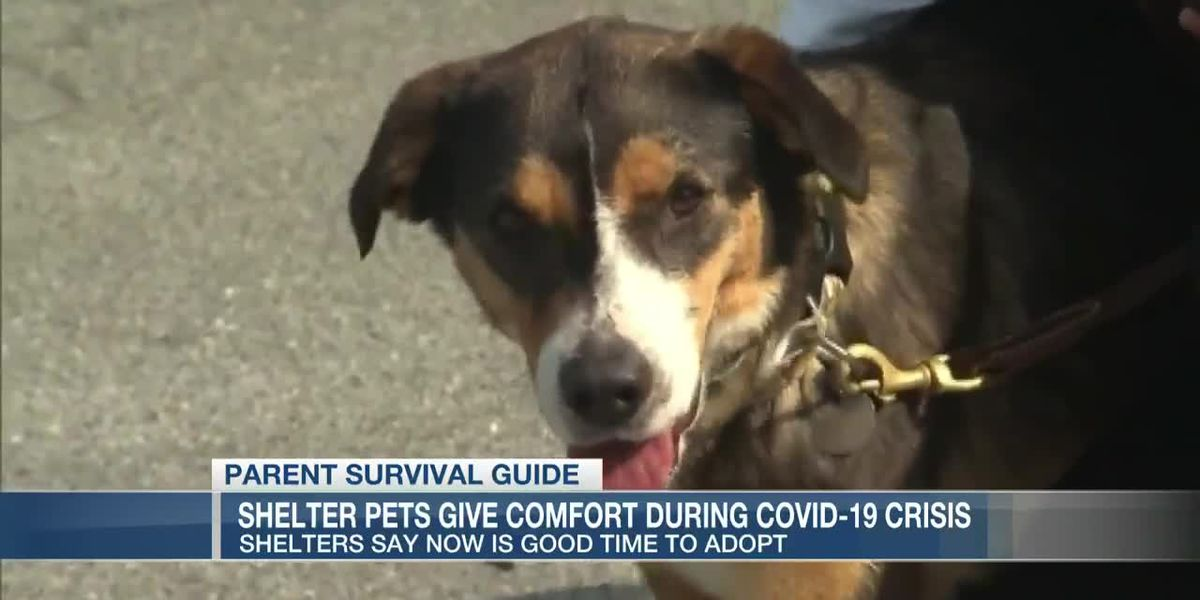 VIDEO: Parent Survival Guide: Shelter pets give comfort during coronavirus crisis