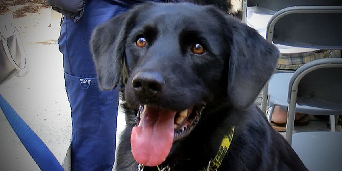 Annual blessing held for therapy dogs at MUSC