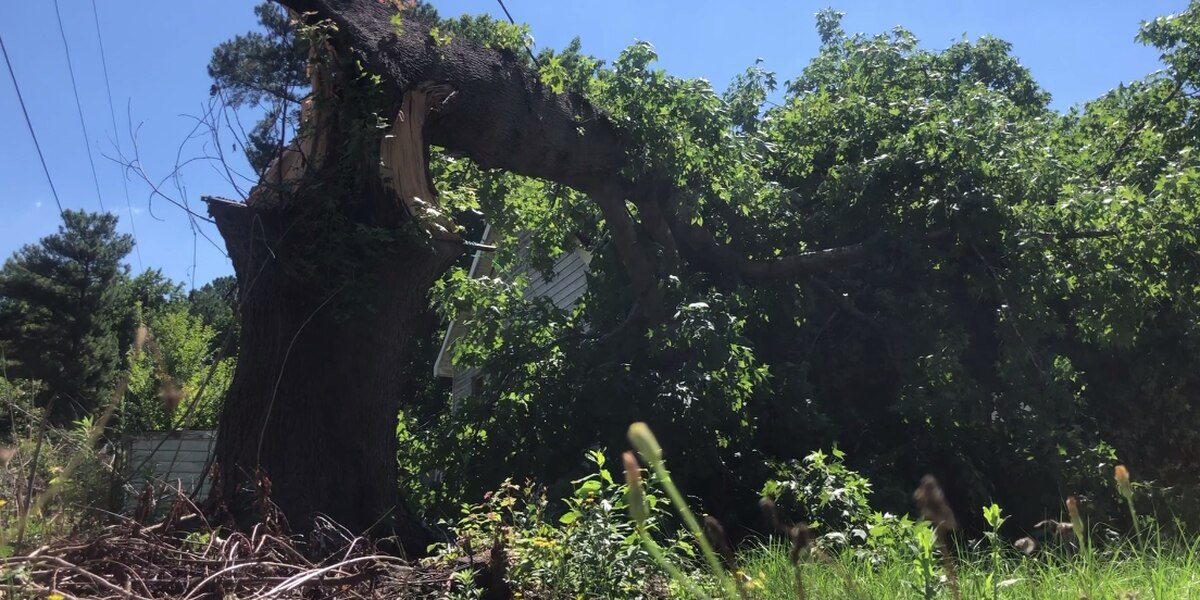 'By the grace of God, we're here': Columbia family is safe after tree falls down on home