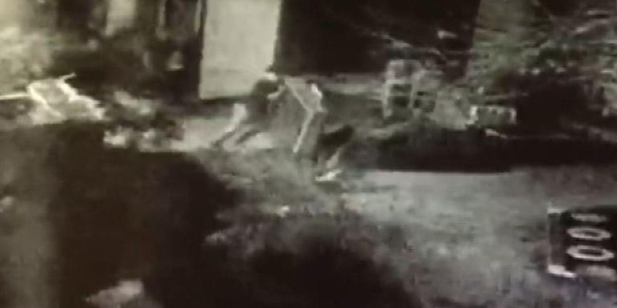Children's museum releases surveillance footage of weekend vandalism