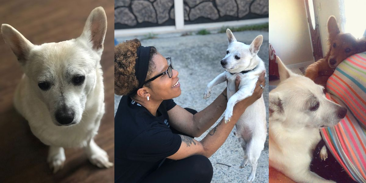 Elgin family searching for dog after Animal Control loses chihuahua