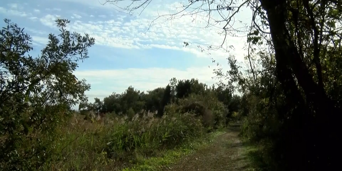 Sullivan's Island moves forward with adjusted plan for maritime forest