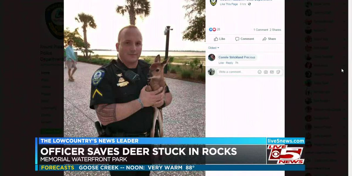 VIDEO: Mt. Pleasant officer saves deer stuck in rocks