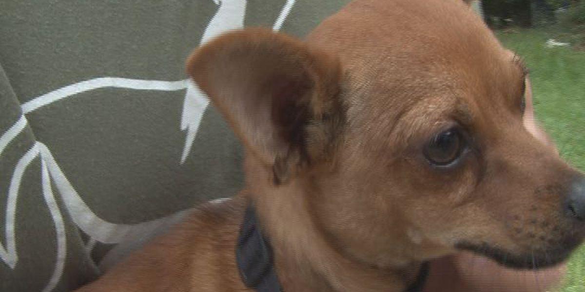 New program offers education, pet healthcare to North Charleston community