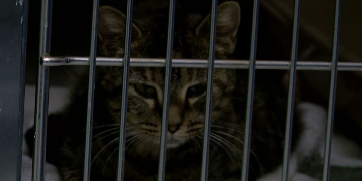 Animals from Doc Williams SPCA get second chance after shelter closes