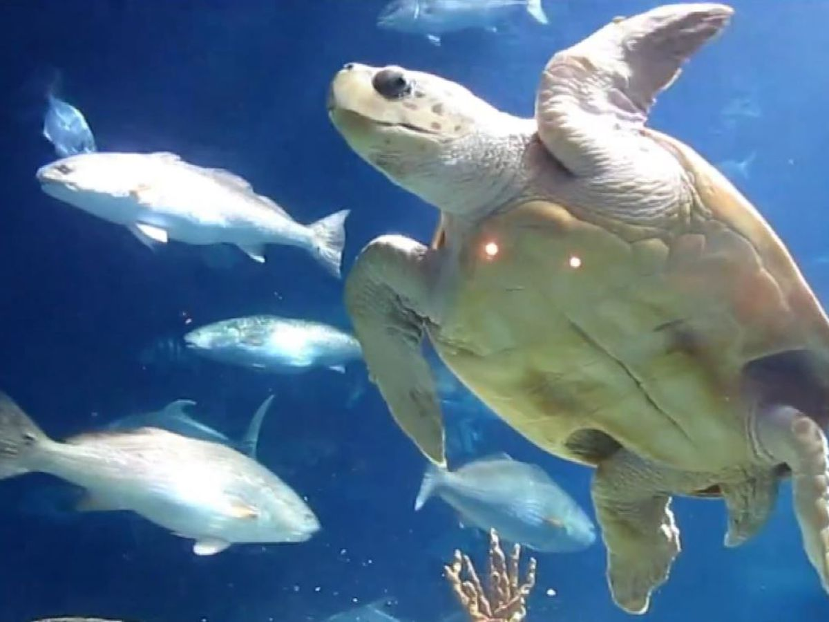 SC Aquarium offers early Cyber Monday sale, trying to save programs